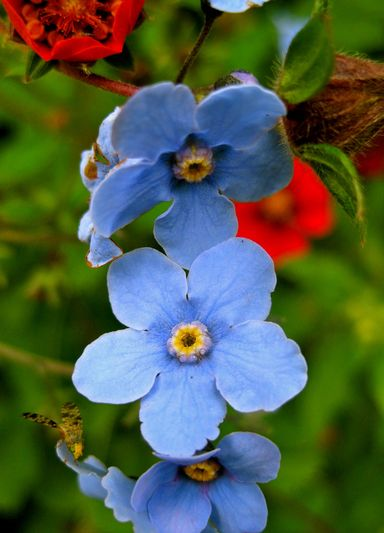 Best Time To Visit Valley Of Flowers Valley Of Flower Treks Valley Of Flowers Trek Trekking Valley Of Flowers Trek To Valley Of Flowers